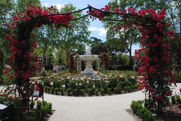La Rosaleda 3