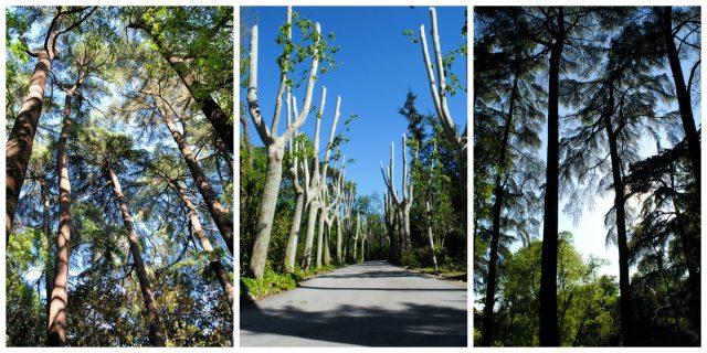 Collage árboles_mini