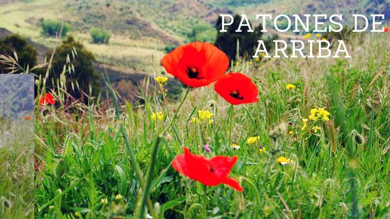 Patones